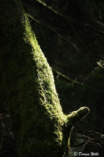 Ballade dans les Hautes fagnes et les sous-bois le 10-08-2011 Img_2668-800x600--2bbd6bc