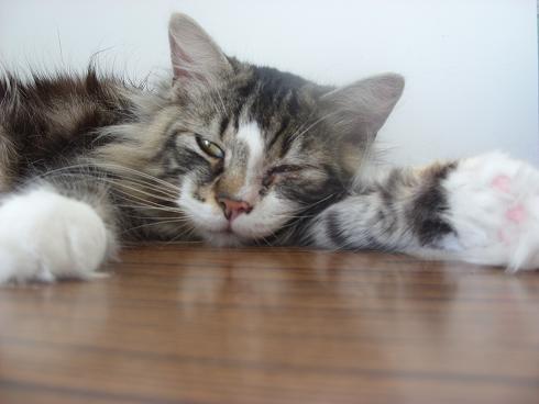 forum des chats conseils suite adoption d 39 un chat spa besoin d 39 aide. Black Bedroom Furniture Sets. Home Design Ideas