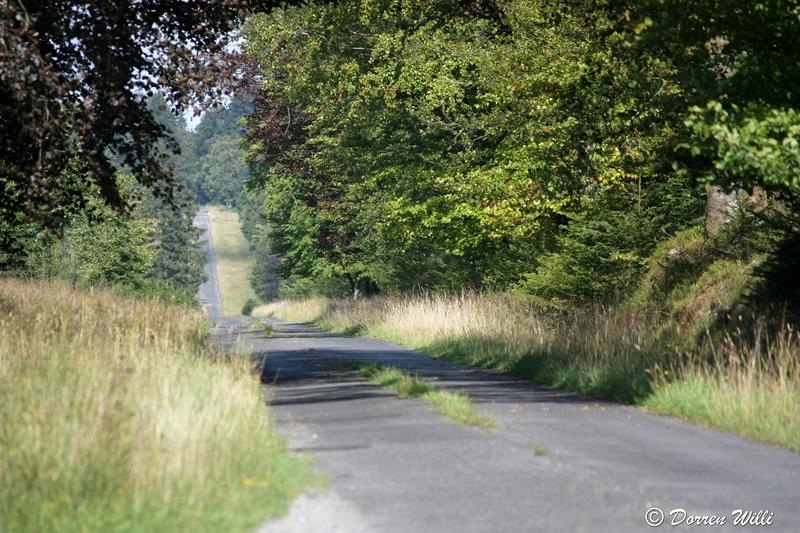 Ballade dans les Hautes fagnes et les sous-bois le 10-08-2011 Img_3004-800x600--2bbda7c