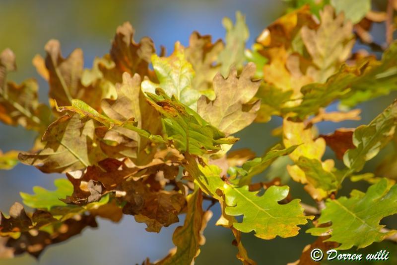 promenade sur les fagnes et alentours ( jalhay ) le 16-oct-2011 Dpp_jalhay---16-o...1---0025-2dd6f1a