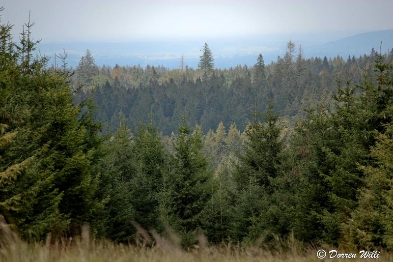 Ballade dans les Hautes fagnes et les sous-bois le 10-08-2011 Img_2732-800x600--2bbd984
