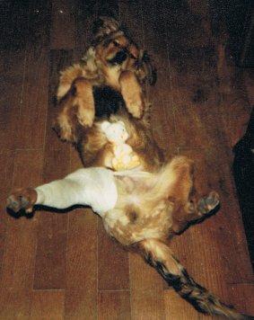 Mon chien Voyou, mes bébés à plumes et compagnie E-et-cie-vouyou-01-2b60936