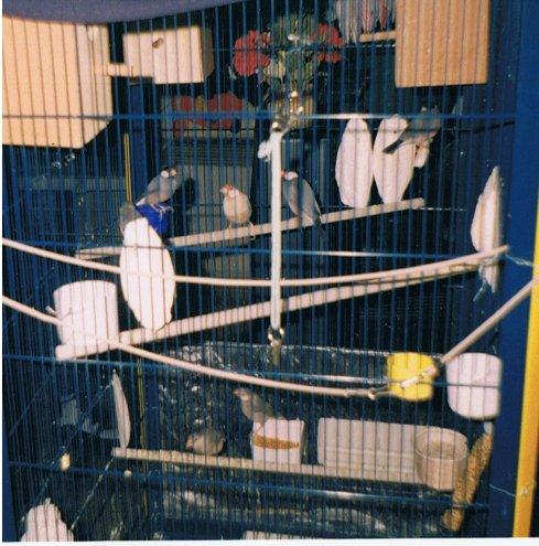 Mon chien Voyou, mes bébés à plumes et compagnie E-et-cie-mes-calf...paddas00-28f38d2