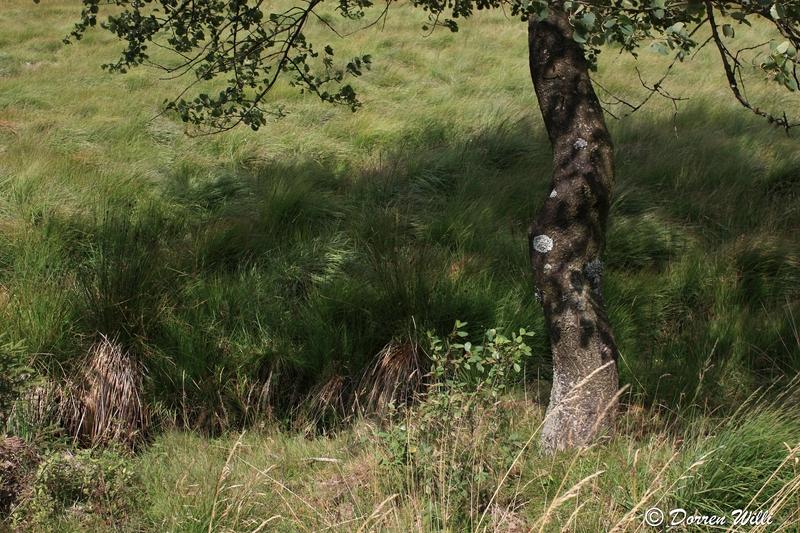 Ballade dans les Hautes fagnes et les sous-bois le 10-08-2011 Img_2636-2-800x600--2bbd654
