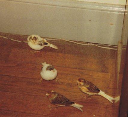 Mon chien Voyou, mes bébés à plumes et compagnie E-et-cie-mouchett...chaou-01-2b5fc5c